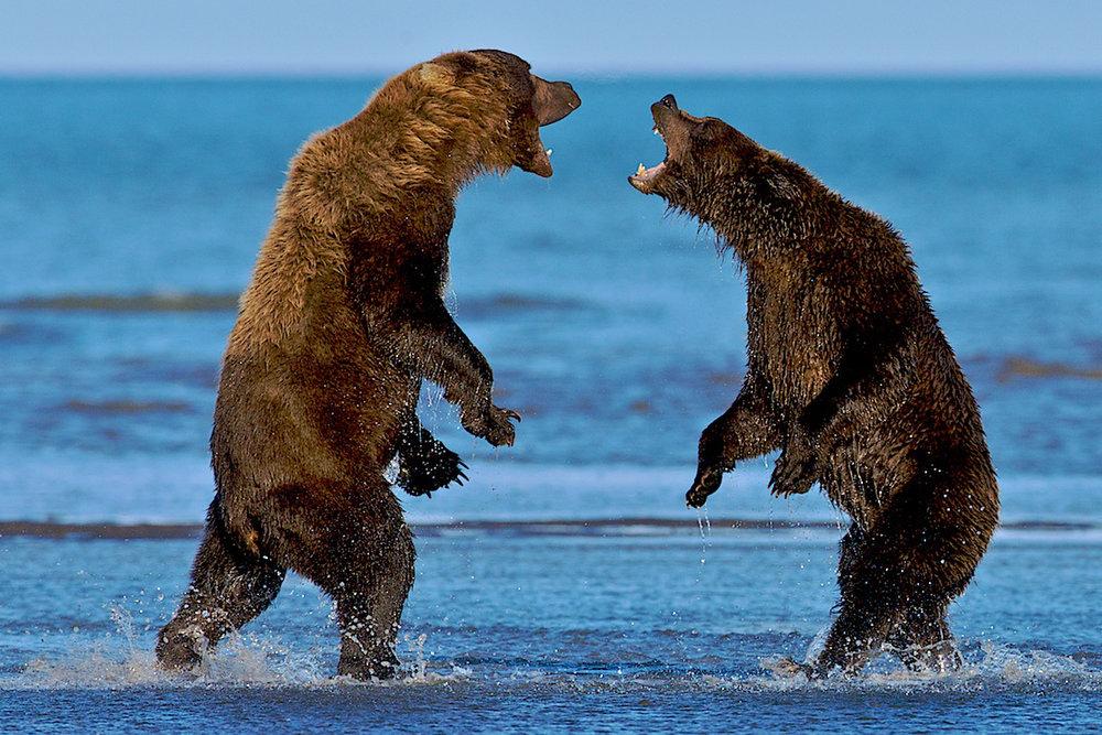 Bears_025 (2).jpg