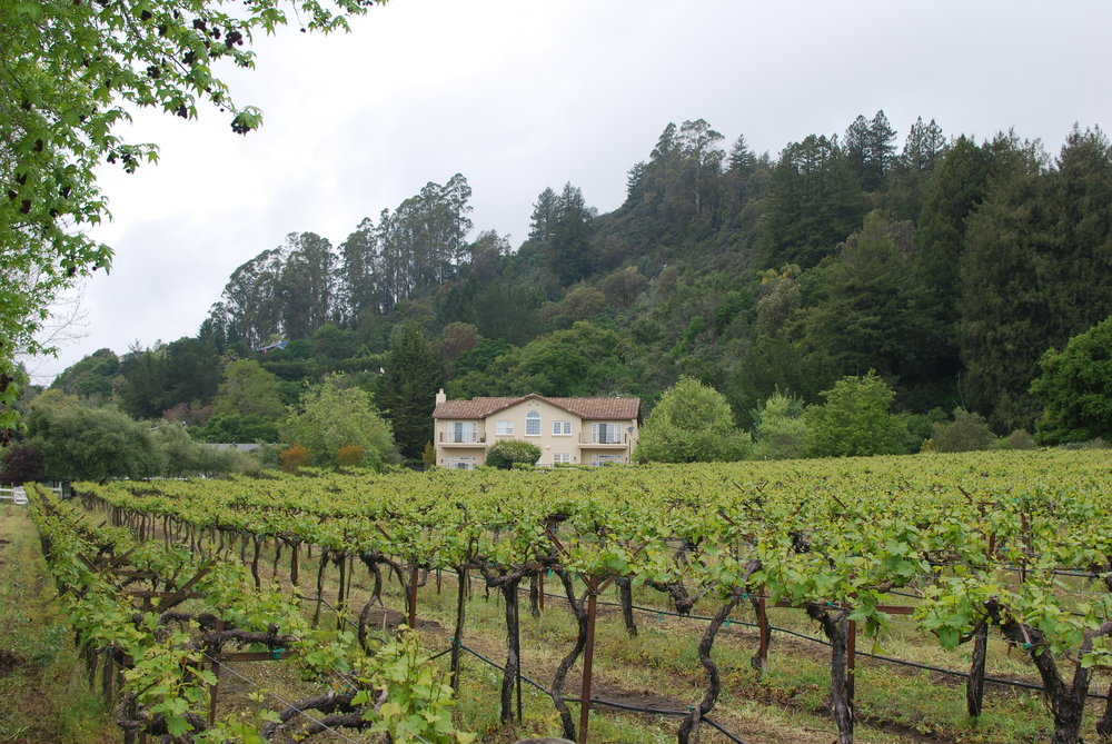 nicholson vineyards