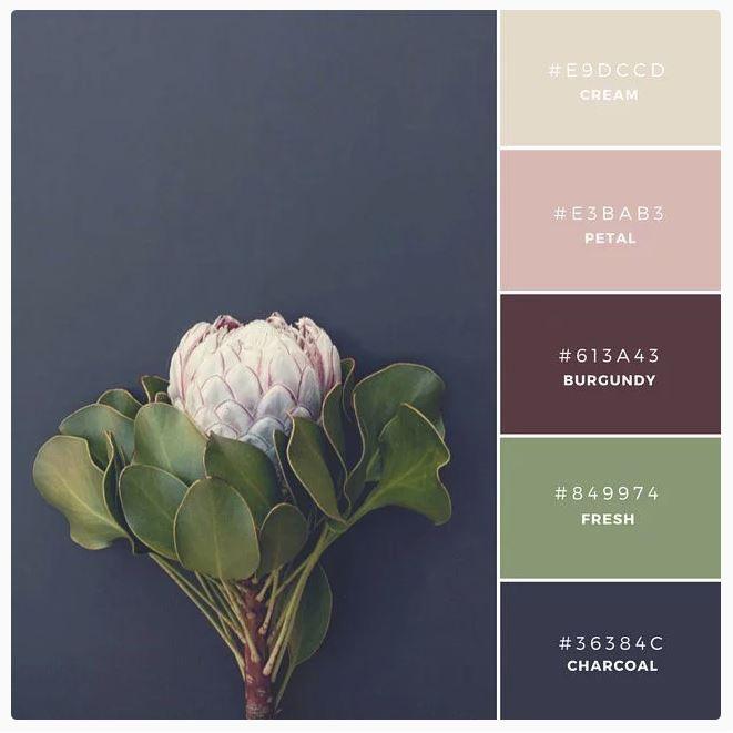 protea_color_palette.JPG