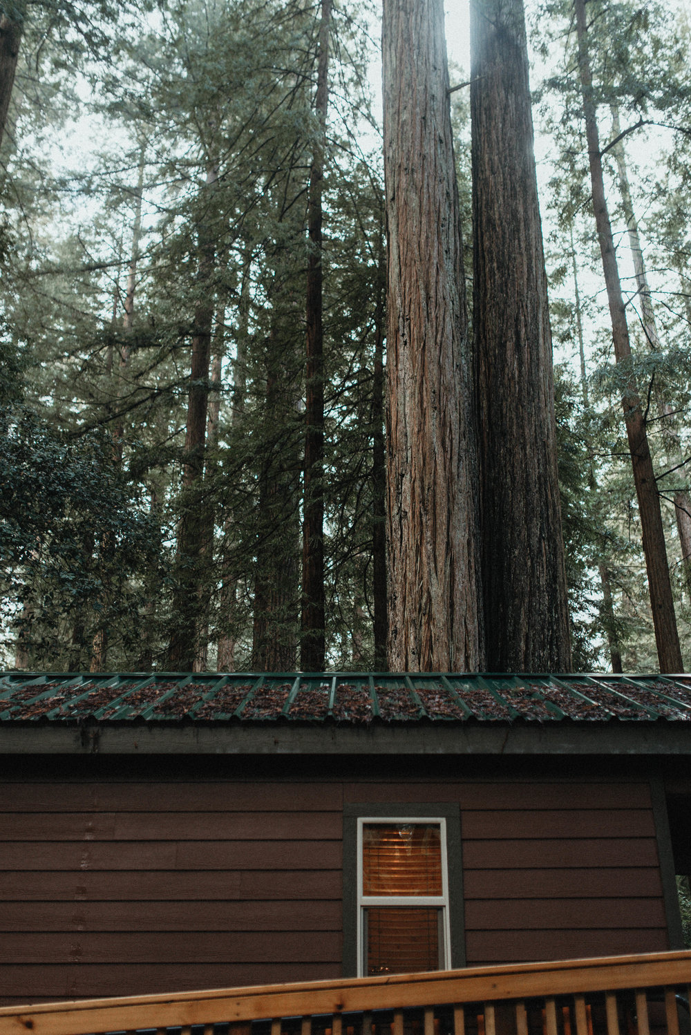 Intimiate Redwoods Elopement , Elopement Inspiration, Jessica Heron Images, Northern California Elopement, Oregon Elopement, Oregon Wedding, Elopement Ideas