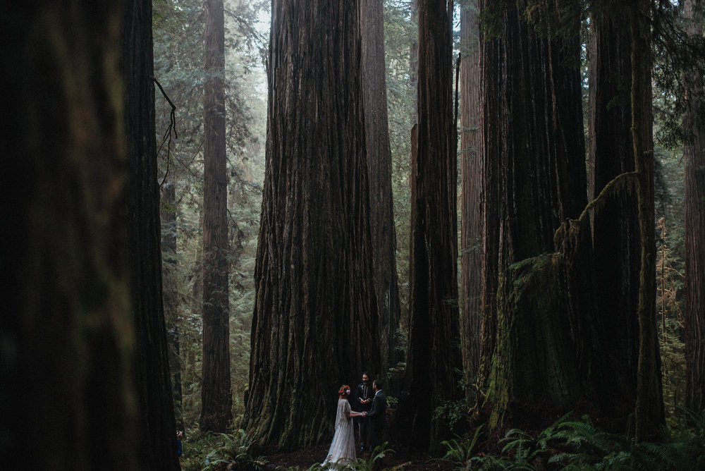Rainy Redwoods Elopement -