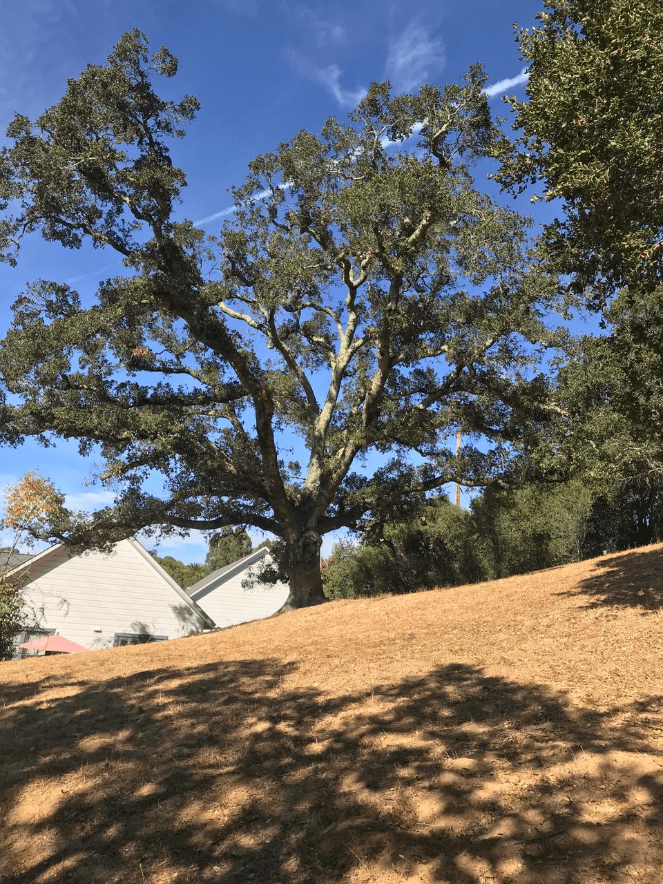 Helios Wellness - Woodside, California