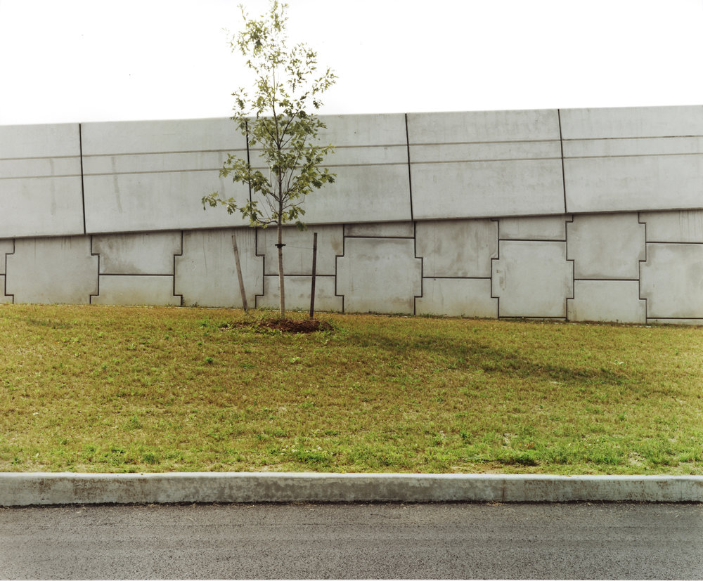 underdogtree.jpg