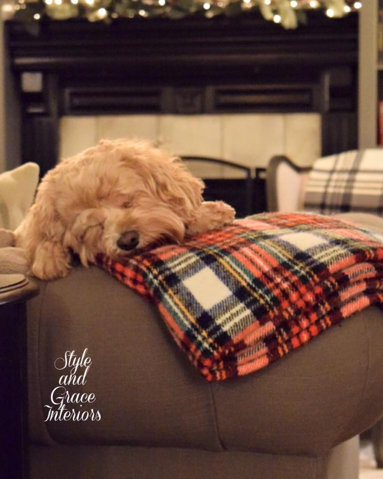 Even Molly is loving plaid this season!