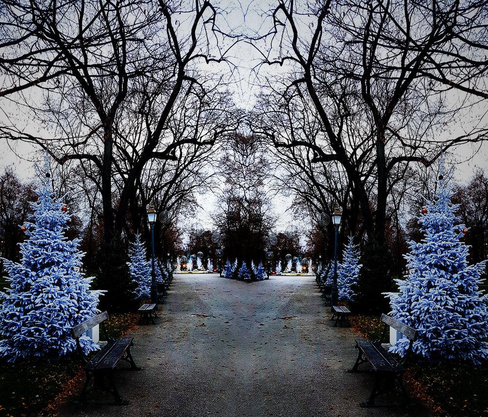 xmasTrees.jpg
