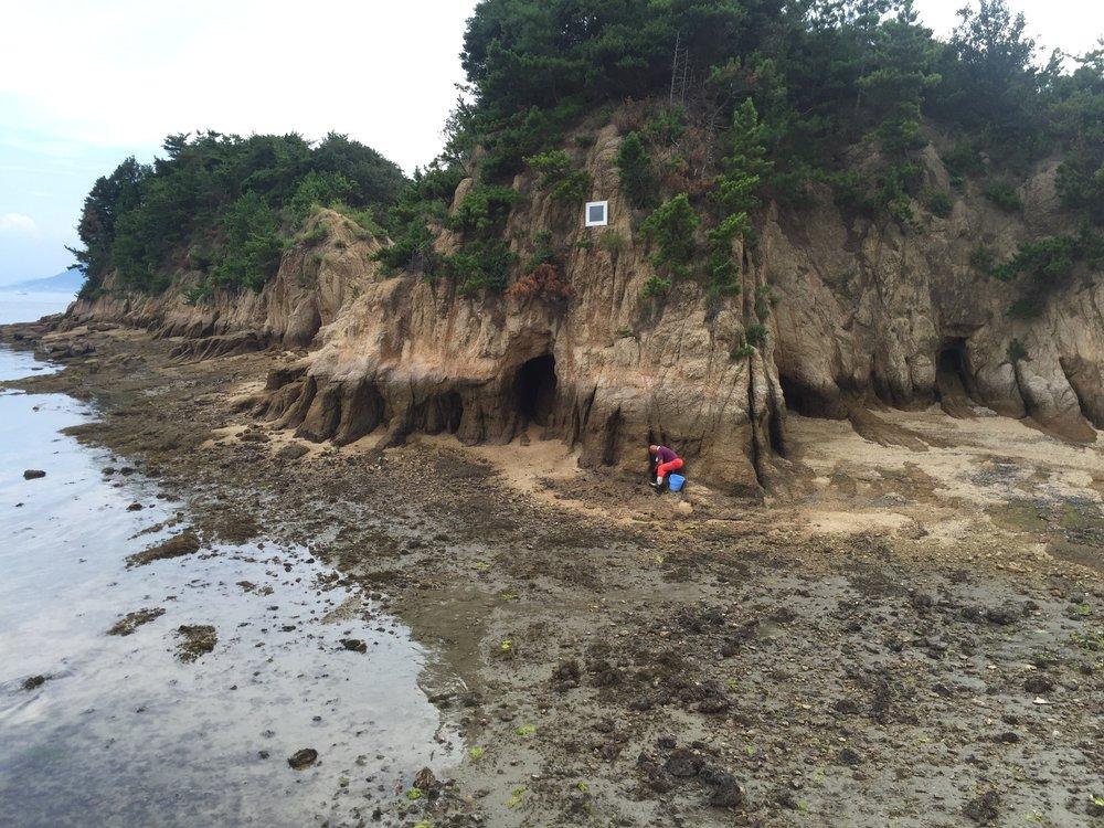 A Naoshima native collecting sea delicacies.