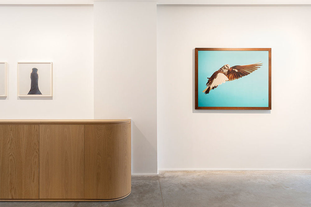 On left: Roni Horn \ Untitled No.10, 2000. On Right: Roe Ethridge \ Pigeon, 2002 at the Charles Riva Collection.