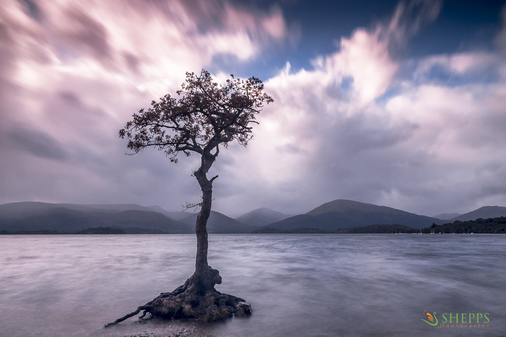 Scotland - Lone tree at Millarochy
