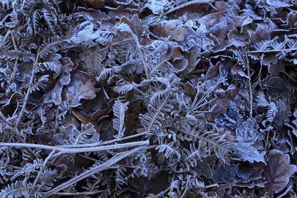 Graham Slater Winter Landscape.jpg