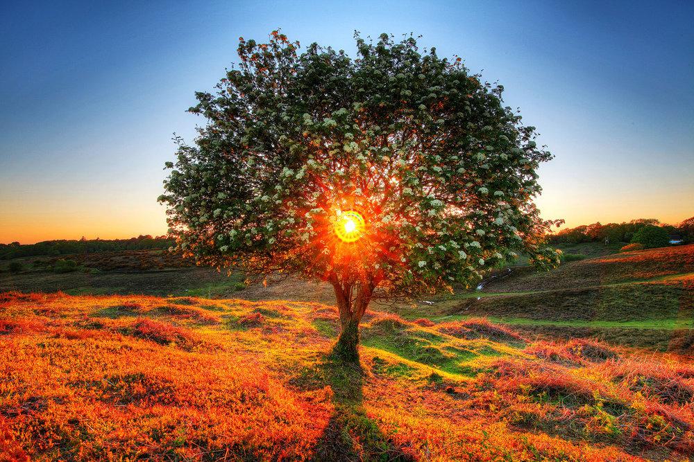 Tree_2000px.jpg