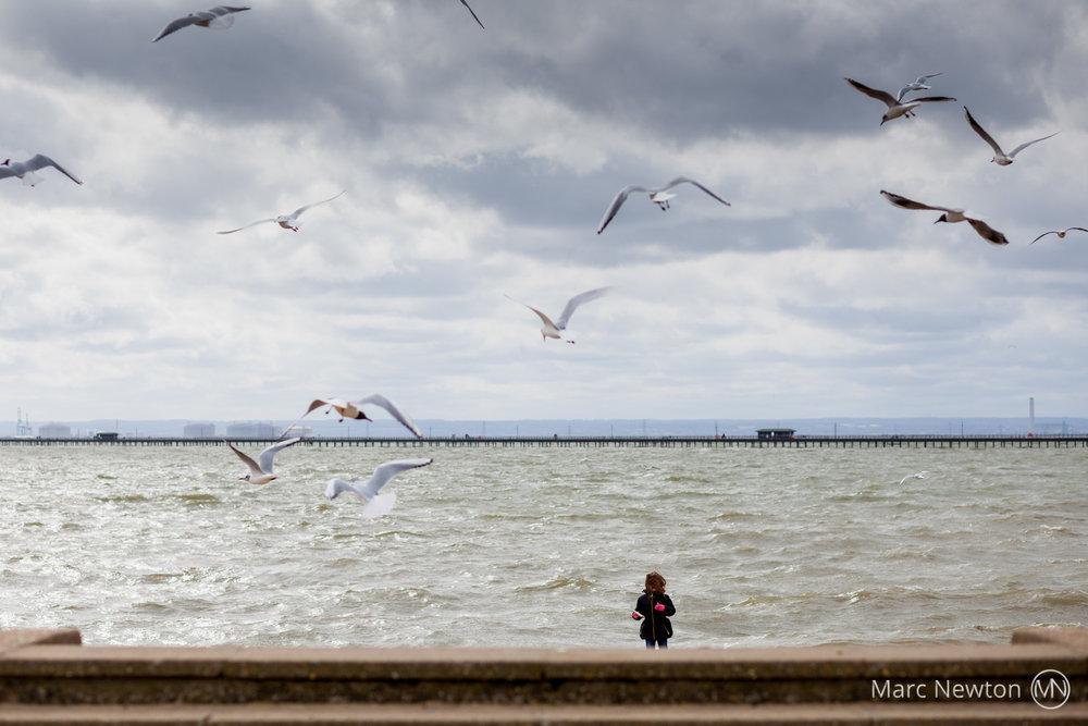 Girl feeding seaguls, Southend on Sea_2000px.jpg