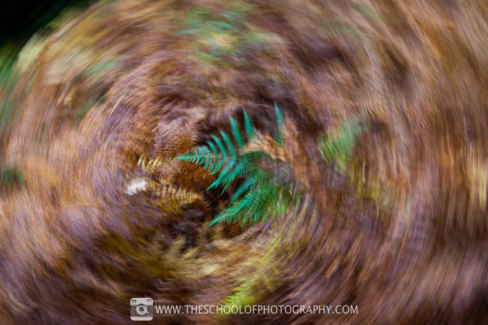 Example of twisting ICM photography technique. 1/4 second shutter speed.
