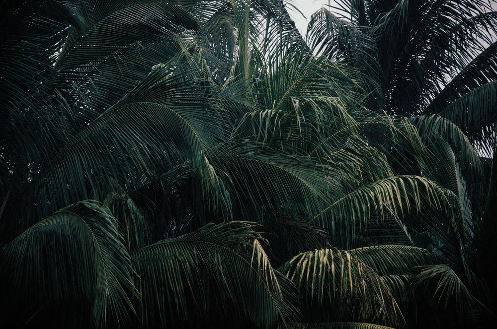 daniel_pazdur-palms_rain.jpg