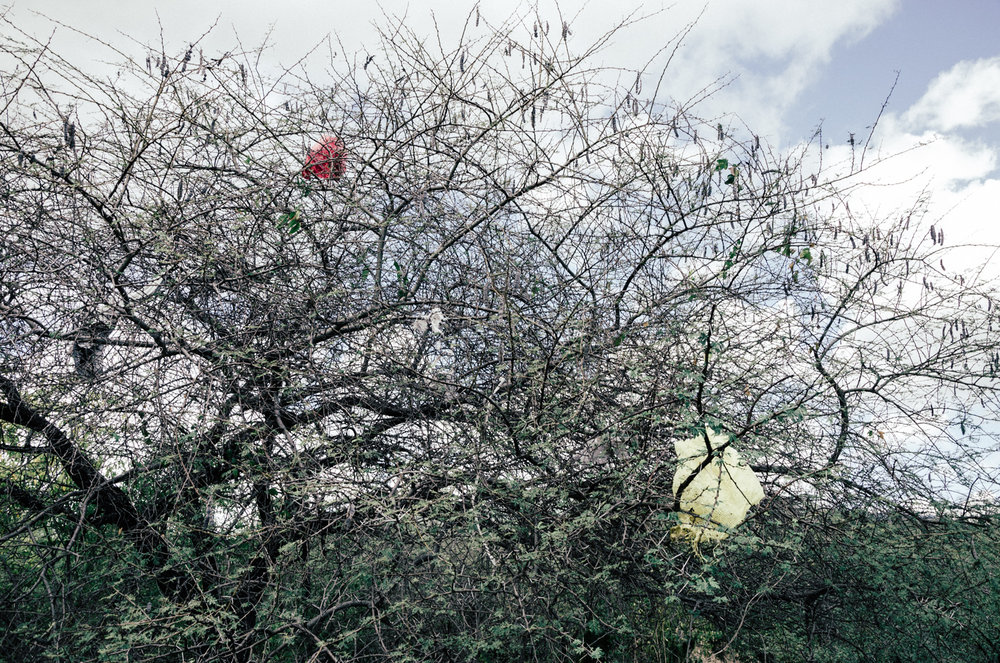 daniel_pazdur-tree_plastic_color.jpg