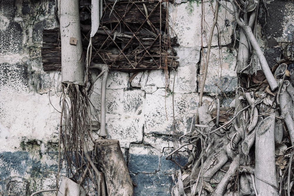 banyan-roots_city-daniel_pazdur-0992.jpg