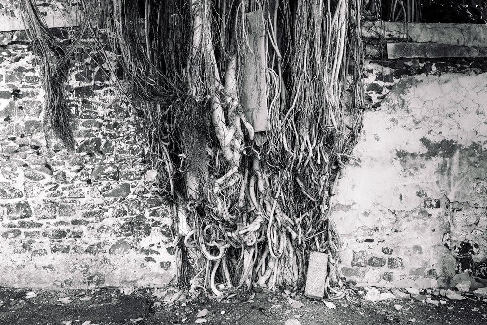 banyan-roots_city-daniel_pazdur-0268.jpg