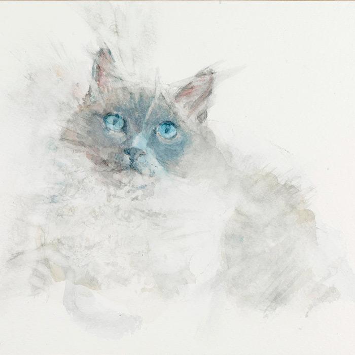 Domestic Cats -