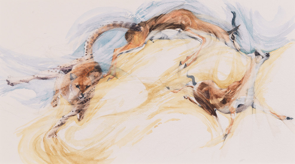 """Twisting and Turning - Cheetah pursuing young Thomsons Gazelle  h. 12.75"""" w. 22"""" (56 cms)"""