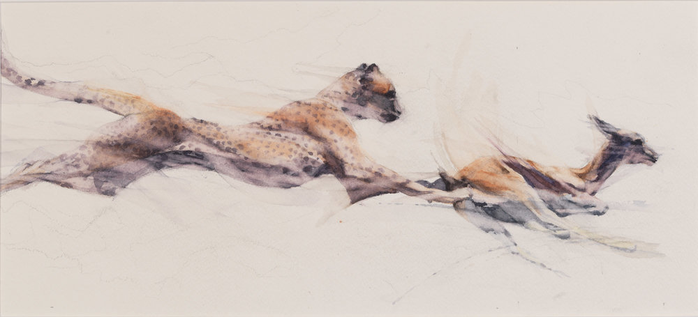 "Cheetah tripping a Thomsons Gazelle  h. 10.25"" (26cms) w. 22"" (56cms)"