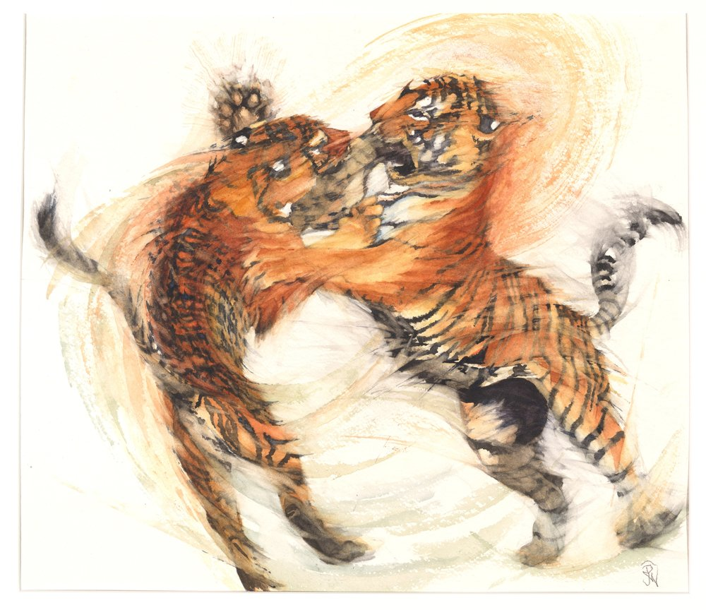 Tigers - Cat Passion