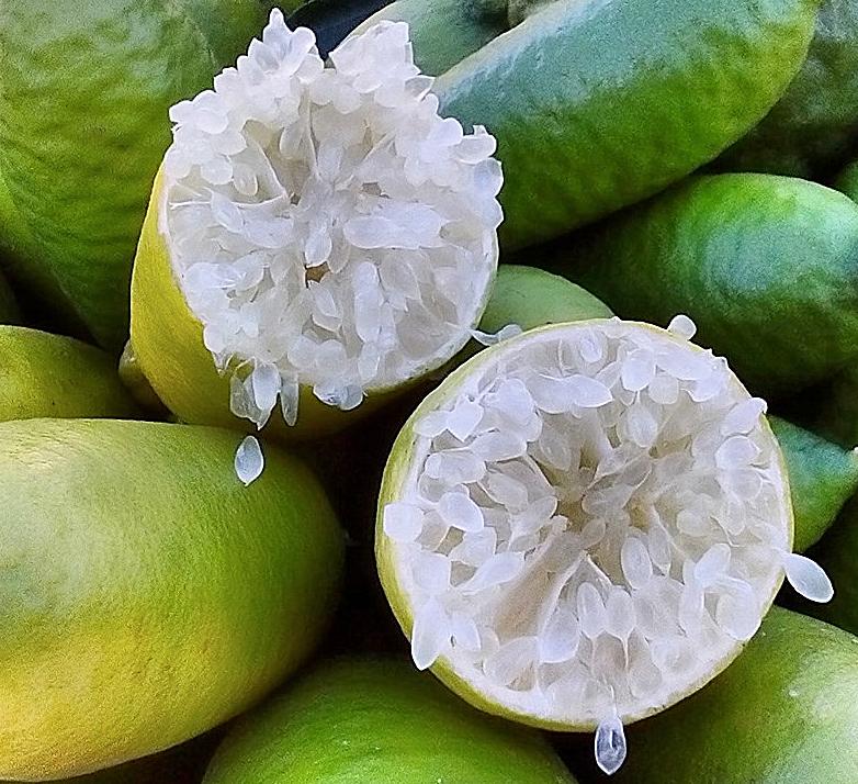 Vescicole simili a quelle del limone