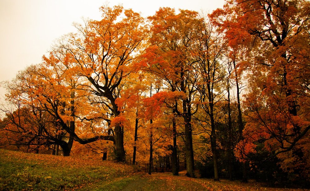 foliage-big.jpg