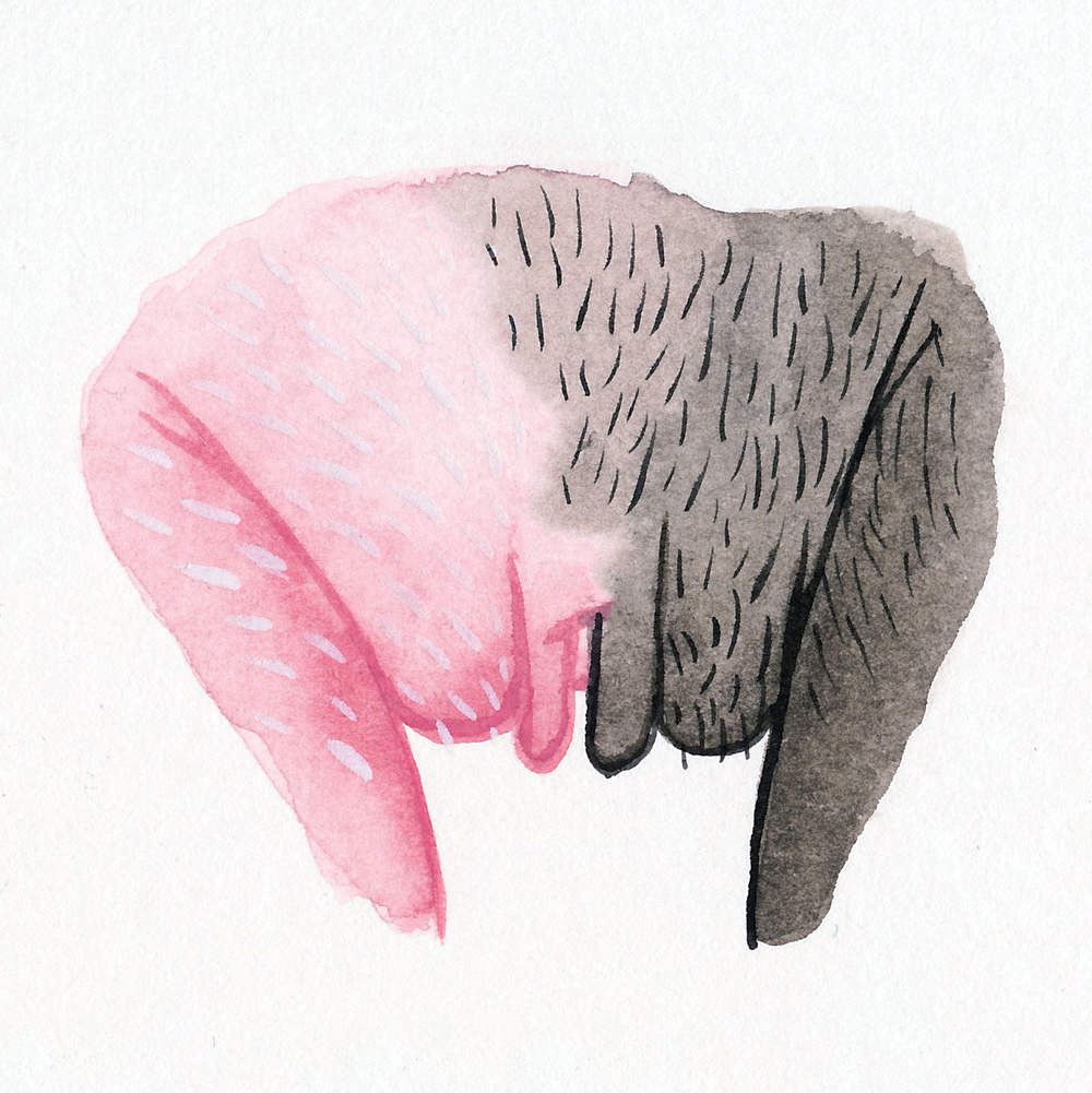 Vitiligo Vulva
