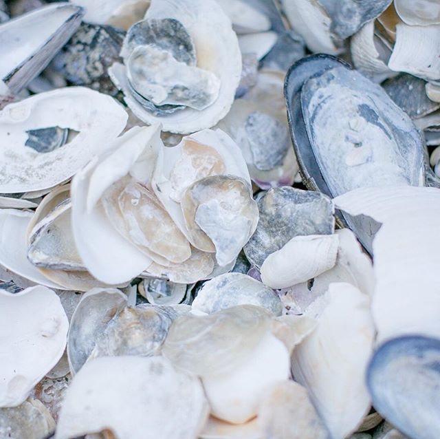 Who else can't help but collect beautiful shells as you walk by the water? They're so difficult to get home in one piece and we really don't have a good use for them but alas, we often bring a pocketful anyway 🐚