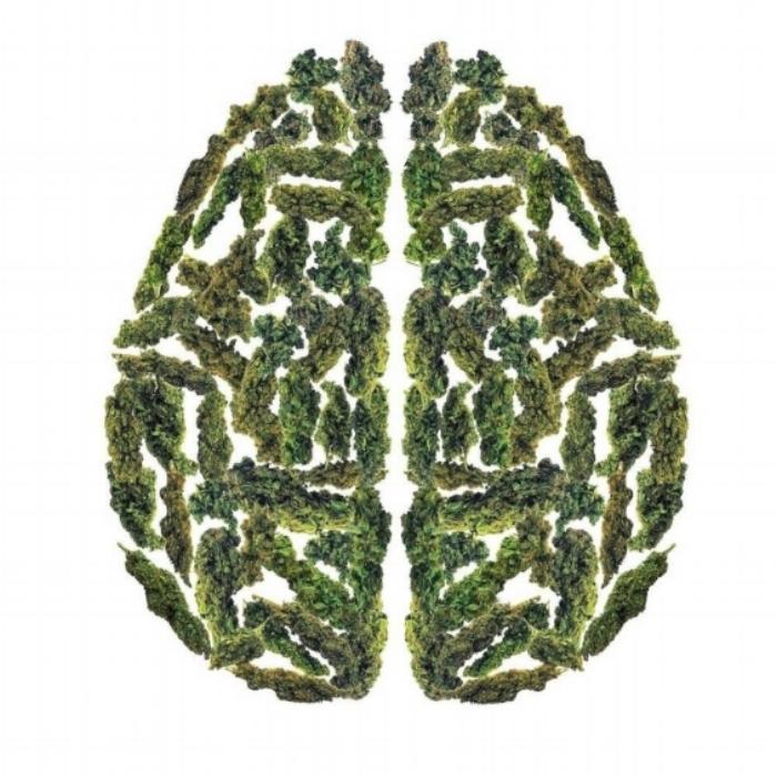 Cannabis for PTSD Treatment