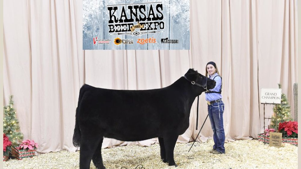 Whiskey in a Wine Glass - Kansas Beef Expo was an awesome show for Whiskey in a Wine Glass. She really peaked at the right time for this show and looked her best. Makenna won the Maine Breed and brought home some purple.