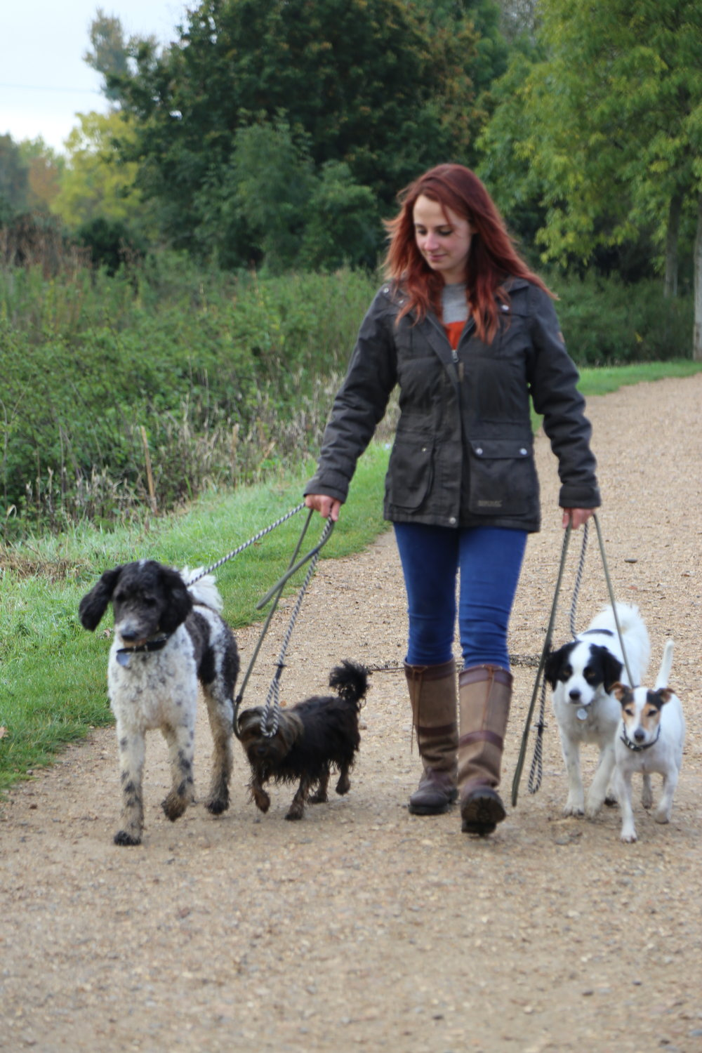 Group dog walk