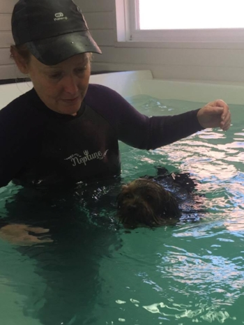 dog _walking_canine_hydrotherapy
