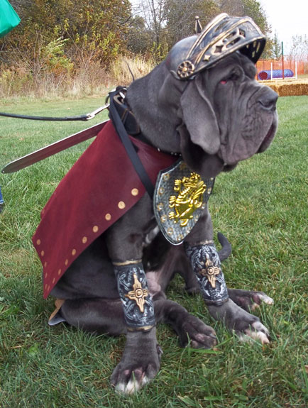 Neopoltian Mastiff - less of a gladiator these days... or is he?