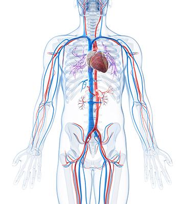 Peripheral Vascular — Shape Memory Medical, Inc.