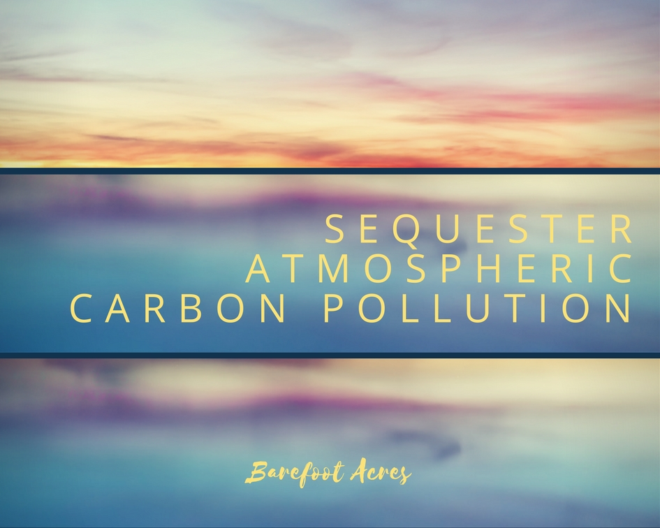Sequester Atmospheric Carbon.jpg