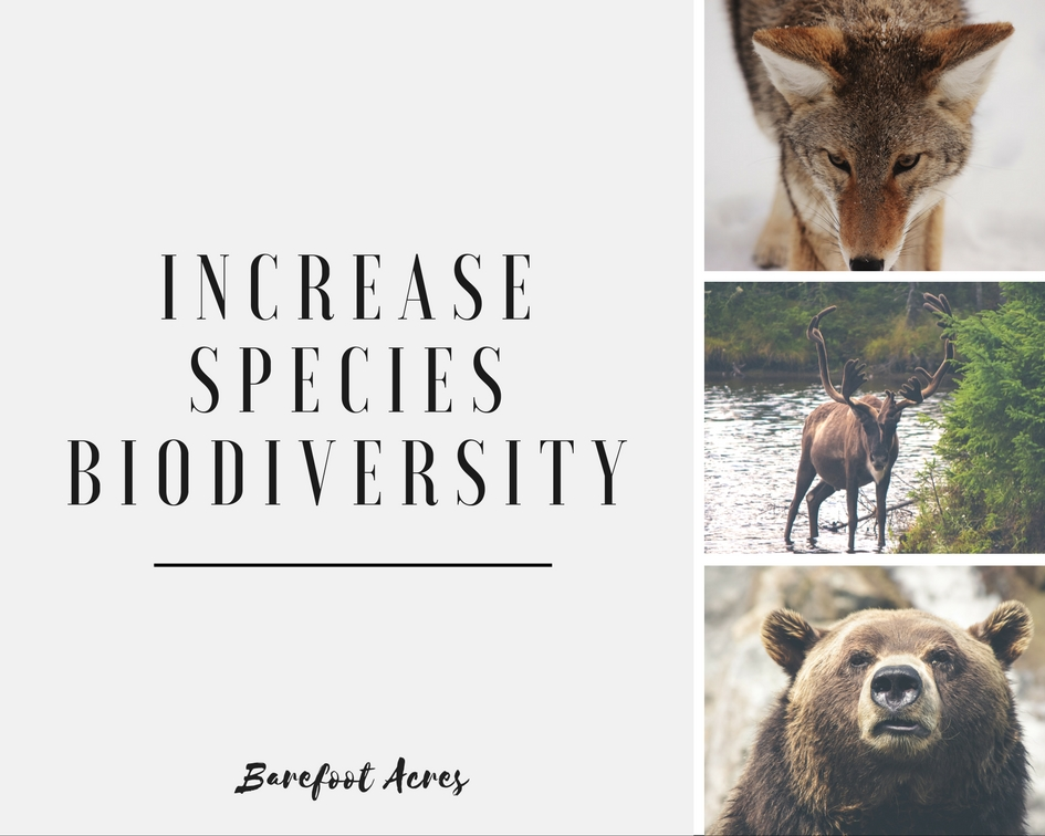 Increasespeciesbiodiversity.jpg