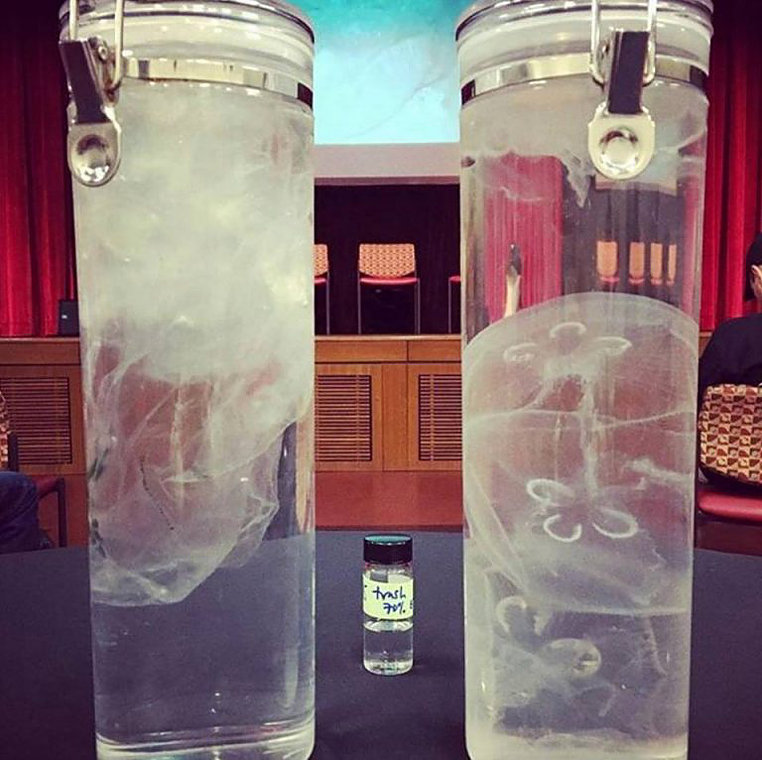 The left is a plastic bag, the right is a jellyfish.