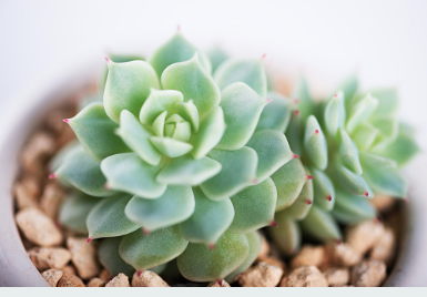You can't have enough succulents in the home. Have fun with them.