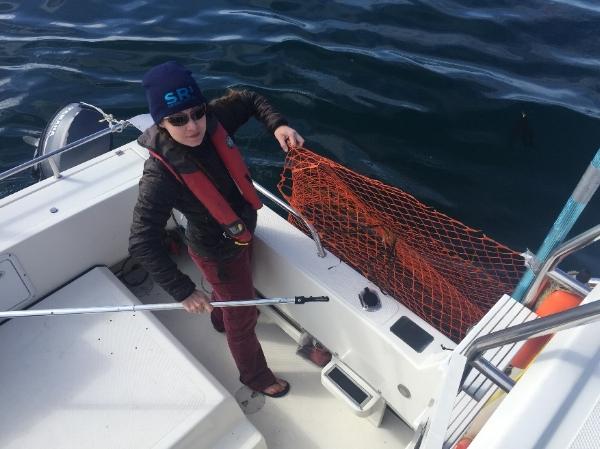 Dr. Fearnbach pulling in marine debris.