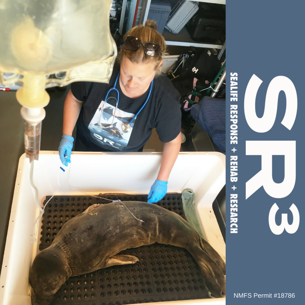 Elephant seal transport, NMFS Permit #18786.png