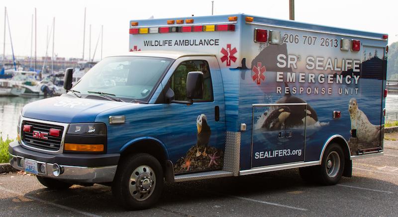 Ambulance marina.jpg