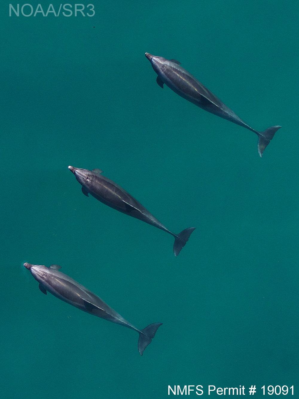 2018 bottlenose dolphin
