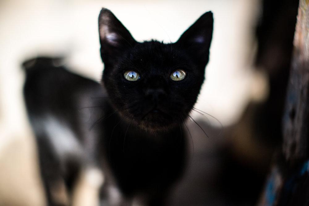 Cat, Essaouira