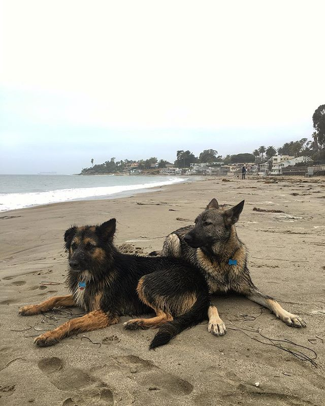 Two Lucky Dogs with  #fbf #gsdofinstagram #gsdmix #dogsofinsta #dogsofinstgram