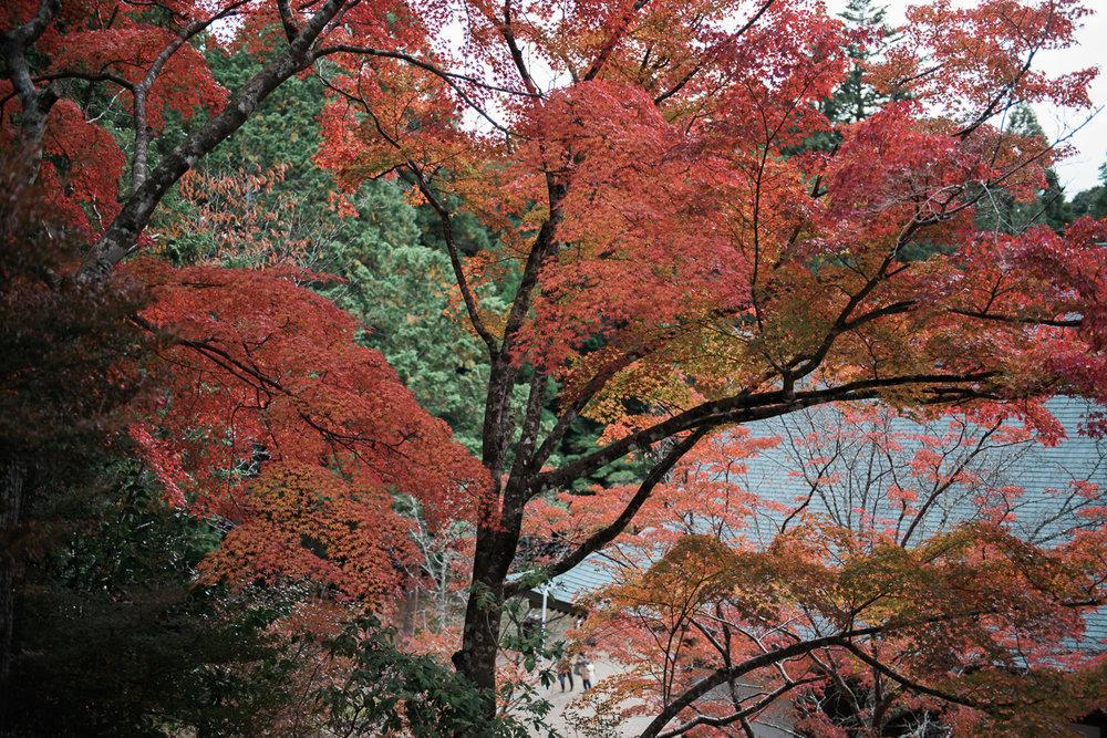 kyotoprewedding-23.jpg