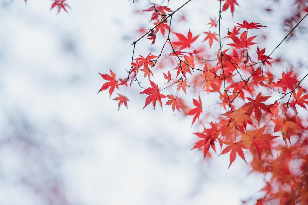 prewedding_Tokyo_Japan-43.jpg