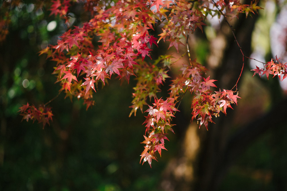 prewedding_Japan_fall-1.jpg