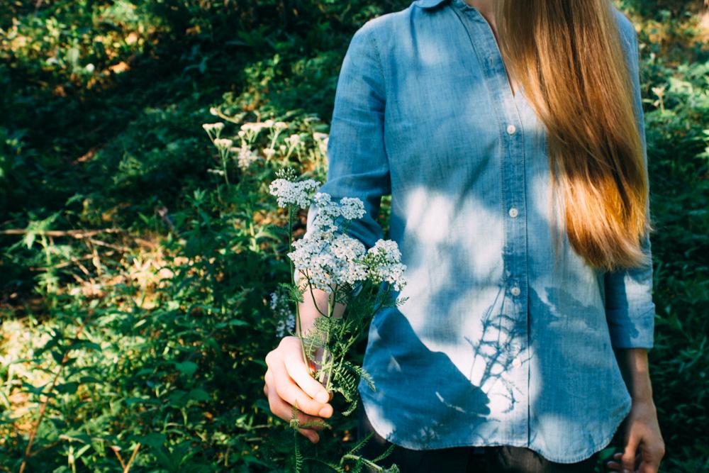 Yarrow blooms.