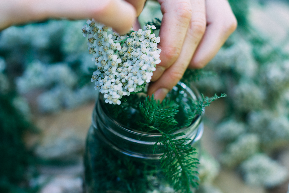 Place yarrow blooms into a jar.