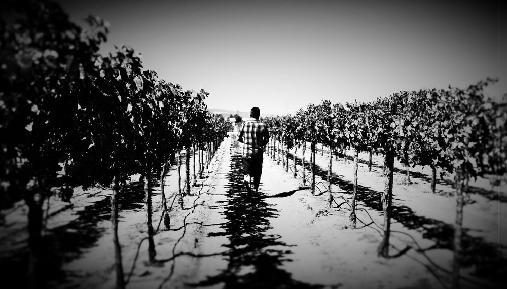 Byron Blatty Wines - L.A. Wine Movement